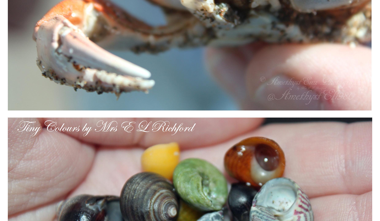 copyright beach treasures collage