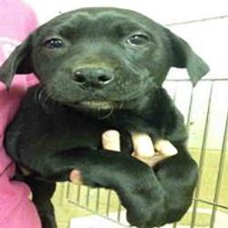black pup 3