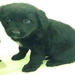 black pup 4