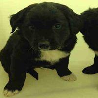 black pup 2