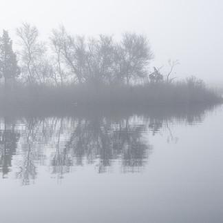 fog-timber.jpg