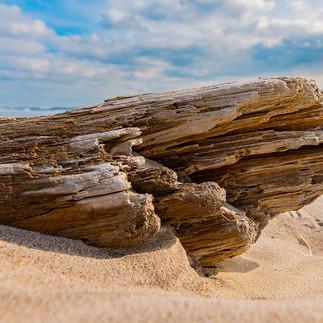 DriftwoodLog.jpg