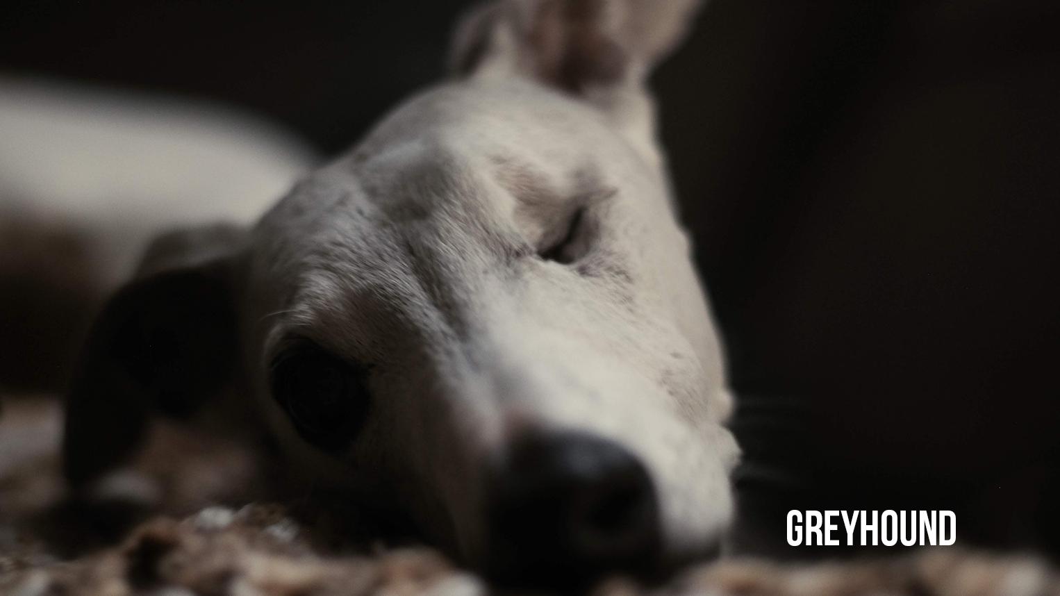 Greyhound Final TN (No Year).png