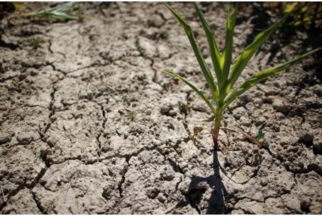 Desertificação, o impacto mais silencioso das mudanças climáticas