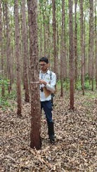Foto de Consultor Ambiental em Inventário Florestal