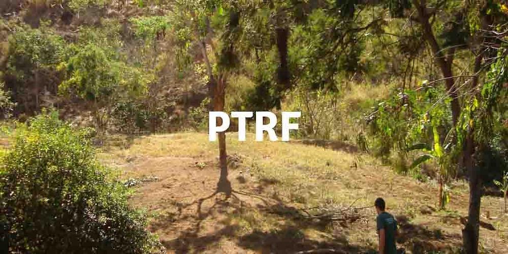 Imagem que representa o PTRF