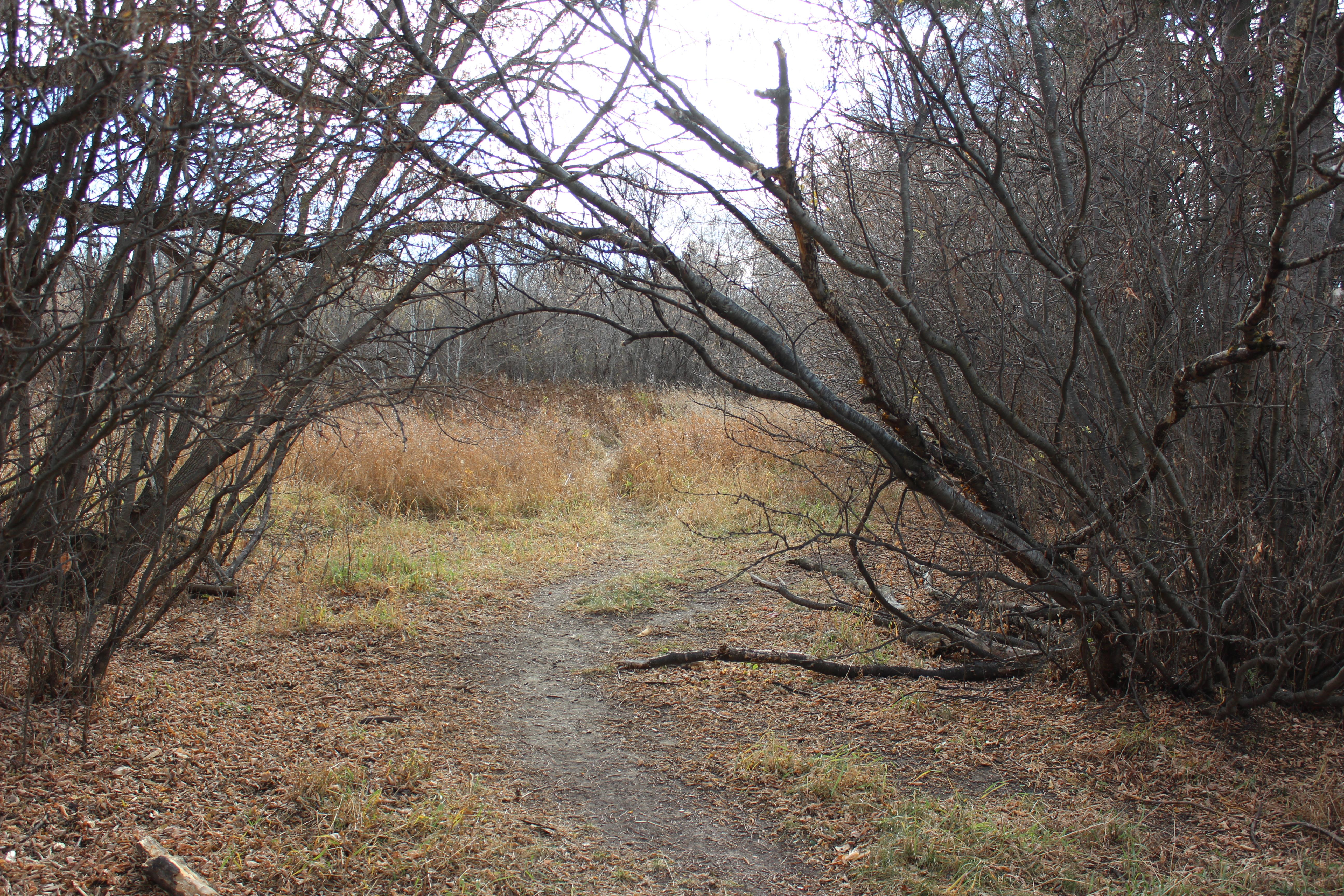 woodland archway II