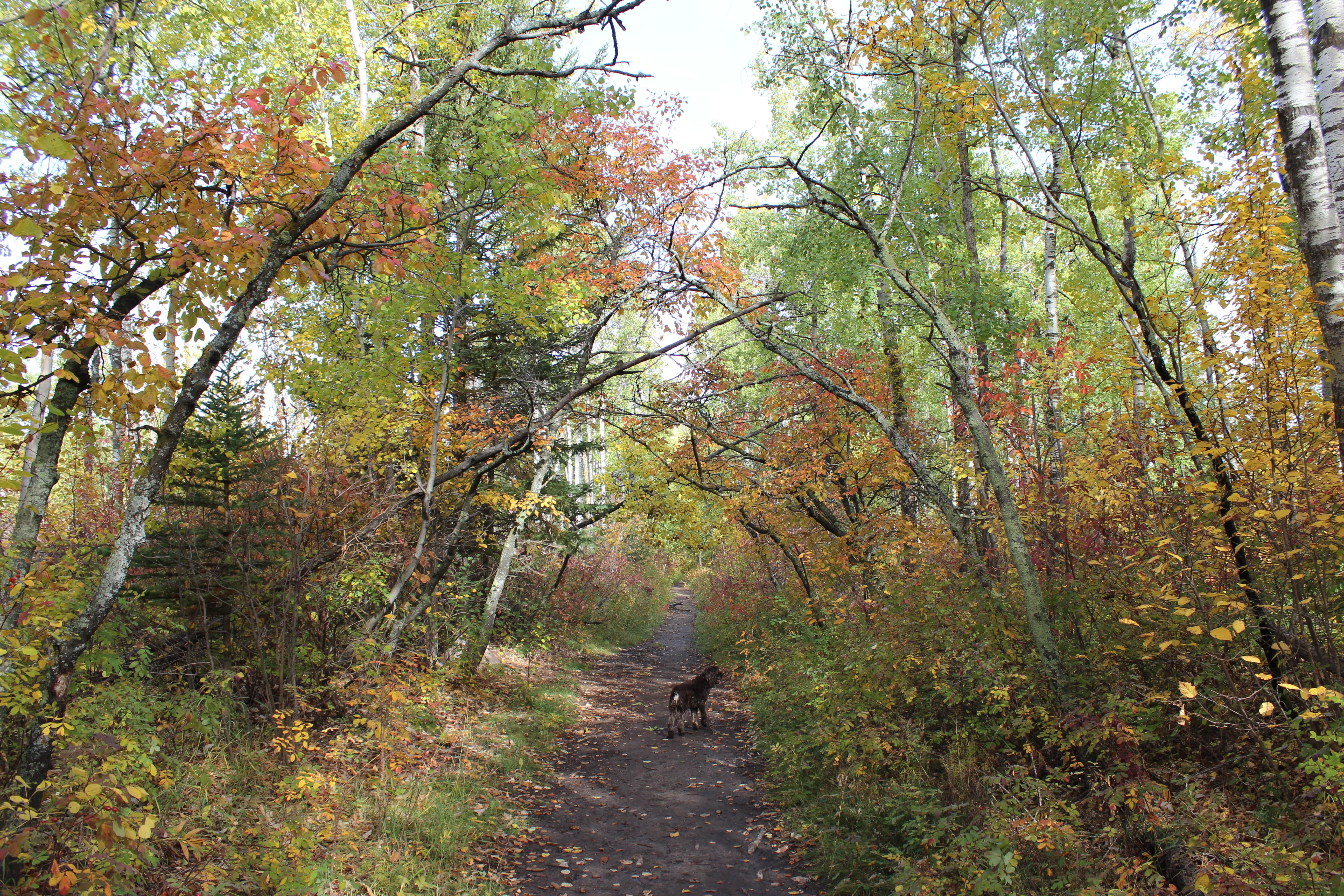 woodland archway