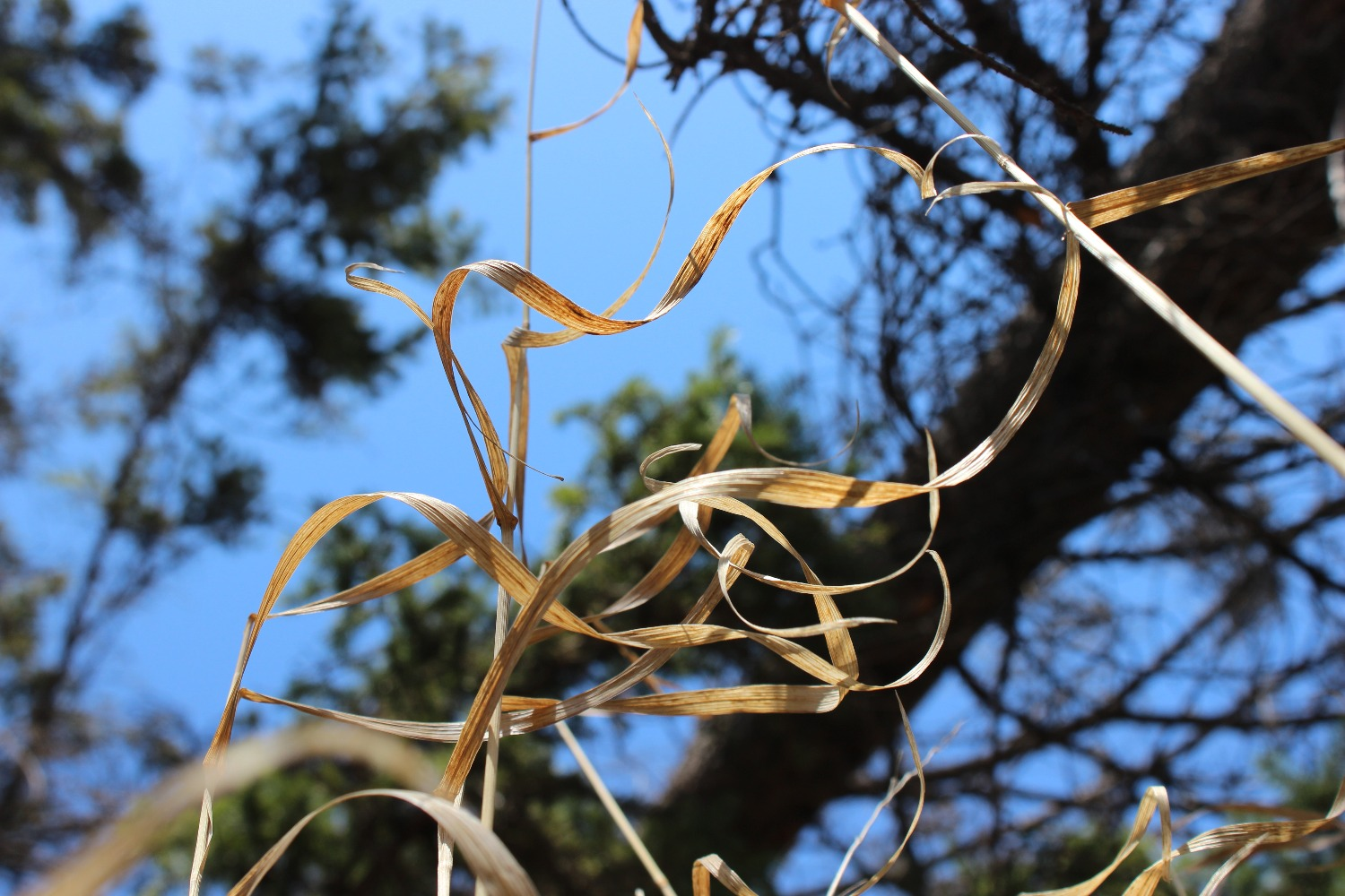 nature's tendrils