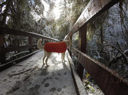 Pepper - Snow Trip
