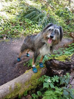 Widget - Hike
