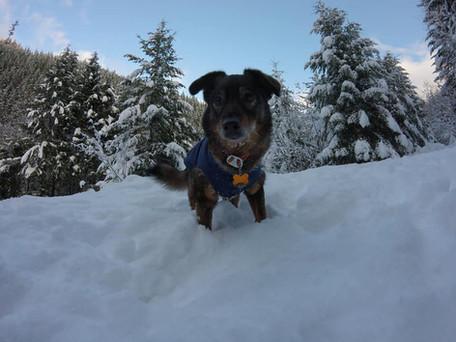 Dakota - Snow Trip