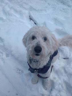 Moxie - Snow Trip