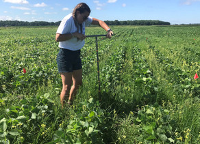 Guilford College student shows cover crops improving soil health