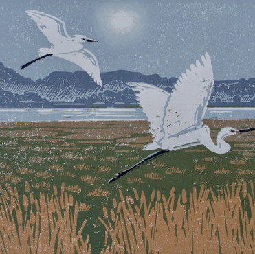 Diane Rose - Little Egrets, Afon Dyfi.jp