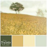 Sunny-Field-Palette.jpg