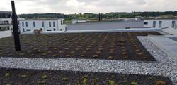 Flachdachabdichtung mit Dachbegrünung