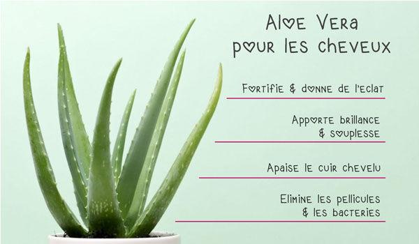 Image Huile Aloe Vera 3.jpg
