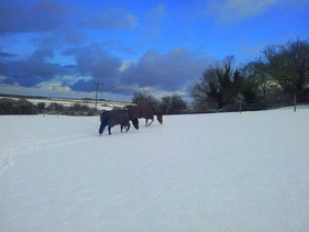 My Favourite picture of our snow ponies!