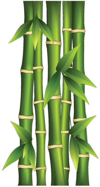 bamboo clipart 1a upside down.png