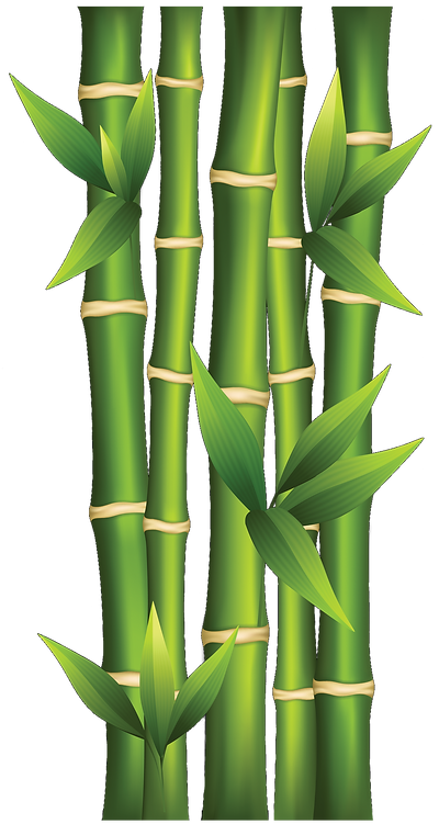 bamboo clipart 1a.png