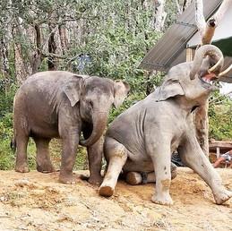 elephant-sanctuary.jpg