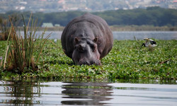 Lake-Naivasha-day-tours