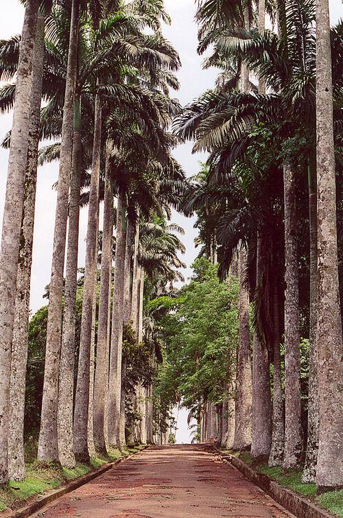 500px-Aburi_Palms_Ghana