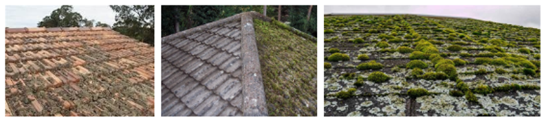 Pictures Of Moss Covered Roofs