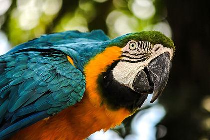 macaw-447711_1920.jpg