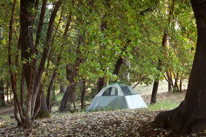 tenting-amongst-the-trees.jpeg