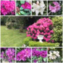 La Belle B&B Rhododendron Garden IMG-213