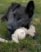 Smug Mutts Natural Dog Products - Natural Dog Toys - Home Page Banner