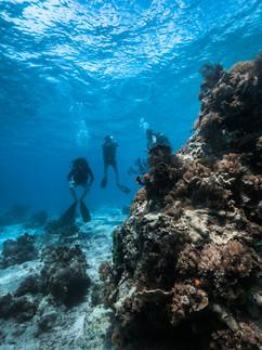 Scuba Diving in Pemba