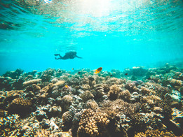 Egypt Reefs
