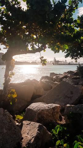 Miami 2019-27.jpg