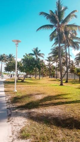 Miami 2019-15.jpg