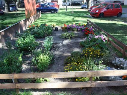 Ogród w centrum. Rusza projekt Zielono nam!