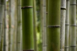 Bamboo-Wallpaper-HD-11.jpg