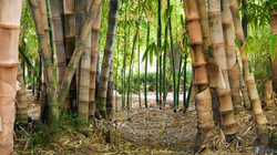 foresta-di-bambu-171631.jpg