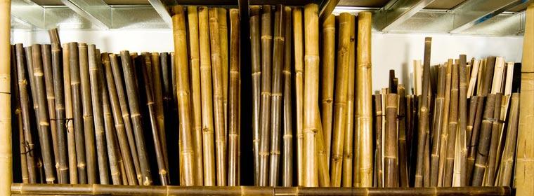 Vendita Bambu Milano.La Pianta Bamboogreenlife