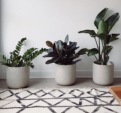 plants potted ceramic with geometric rug