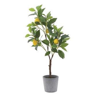 Anna Faux Lemon Tree