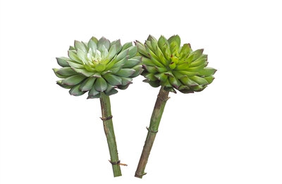 """4"""" Succulent Stem"""