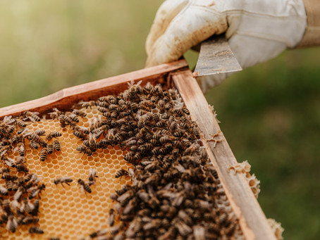 62. The Government is Killing the Bees