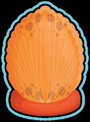 Shells_5