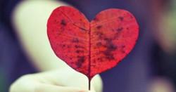 Só o amor transforma !
