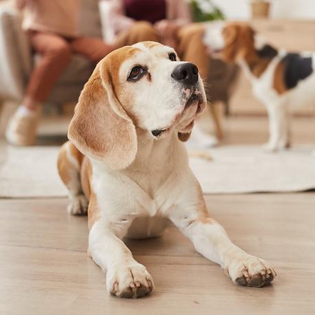 Enfermedades comunes en mascotas adultas