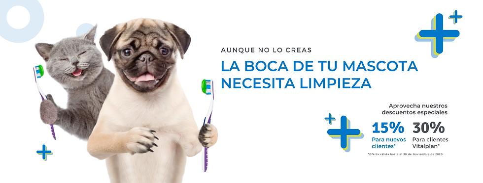 Limpieza dental de mascotas.png