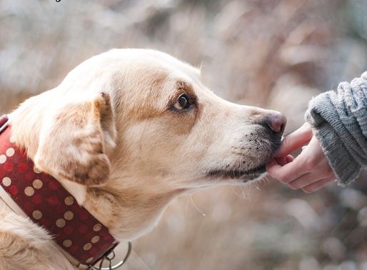 Frente al Coronavirus: Tu mascota no está sola